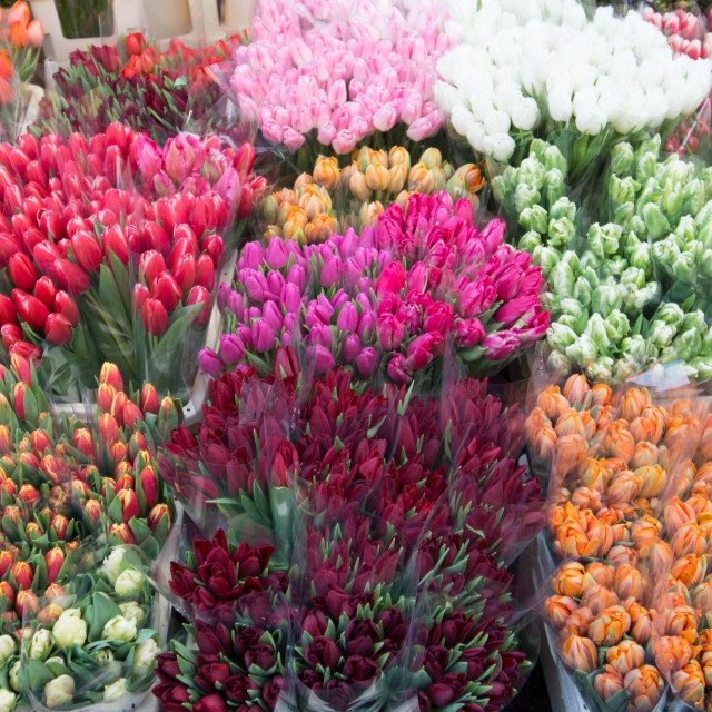"""""""Bunches Of Tulips"""" stock image"""