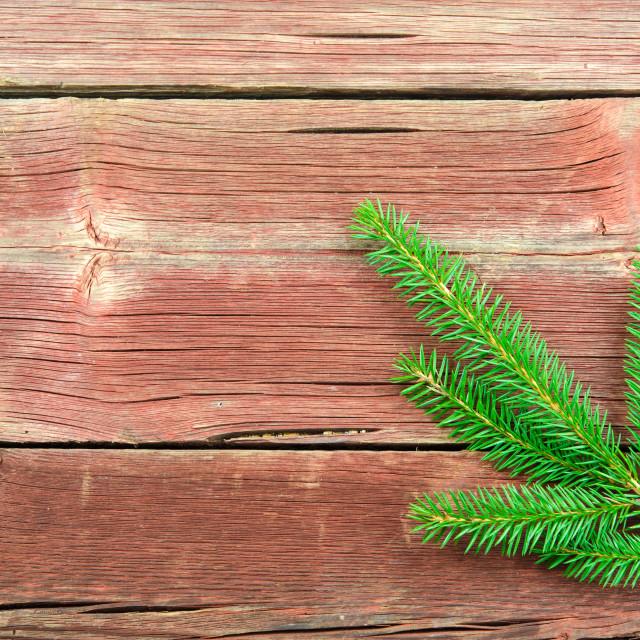 """""""Single spruce twig"""" stock image"""