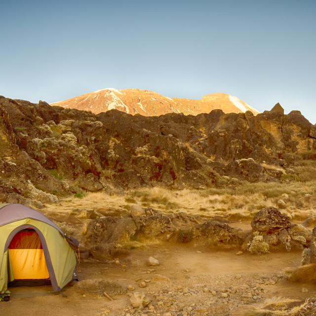 """""""Alpenglow, Kilimanjaro, Africa"""" stock image"""