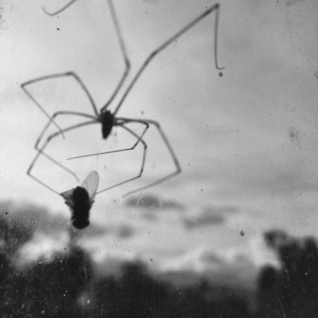 """Spider nest"" stock image"