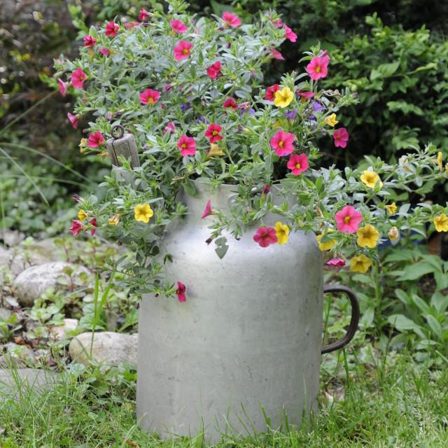 """Milk jug with flowers"" stock image"