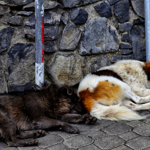 """""""Let sleeping dogs........"""" stock image"""