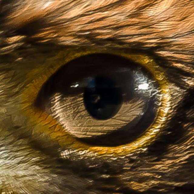 """Hawk Eye"" stock image"