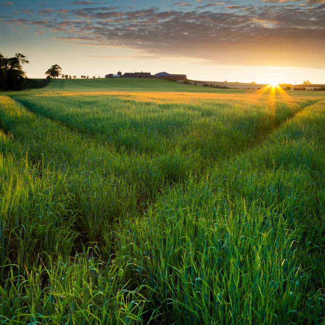 """Ayrshire Farm Sunrise"" stock image"