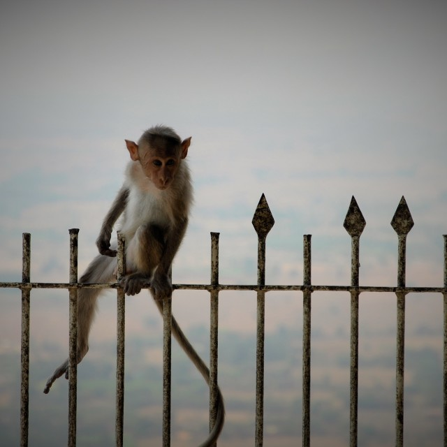 """Lonely Monkey"" stock image"