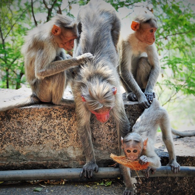 """Monkey Family"" stock image"