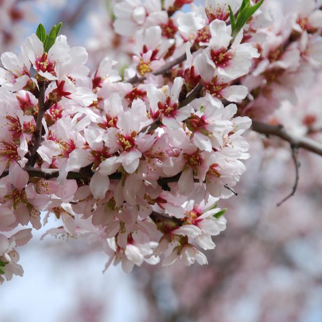 """""""Spring in Madrid"""" stock image"""