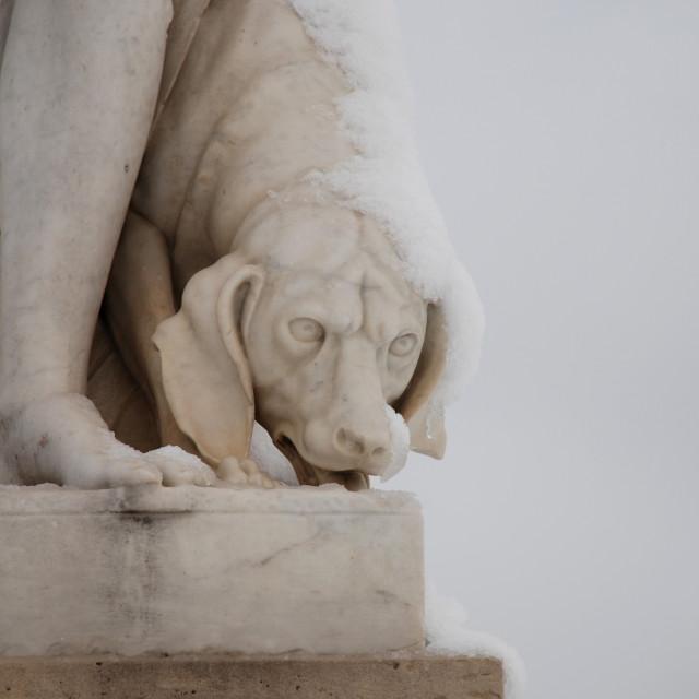 """Snowy dog"" stock image"