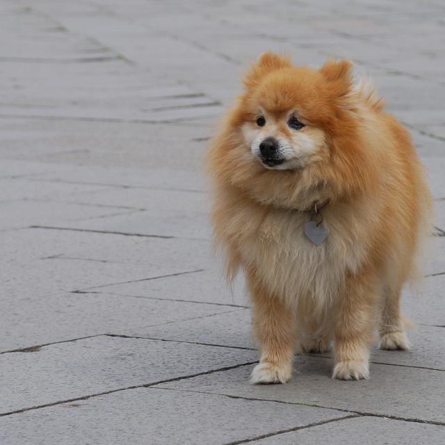 """""""Fluffy dog"""" stock image"""