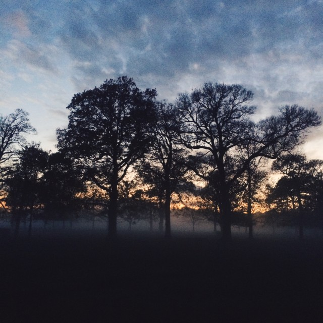 """""""Wollaton Hall and Deer Park part 3"""" stock image"""