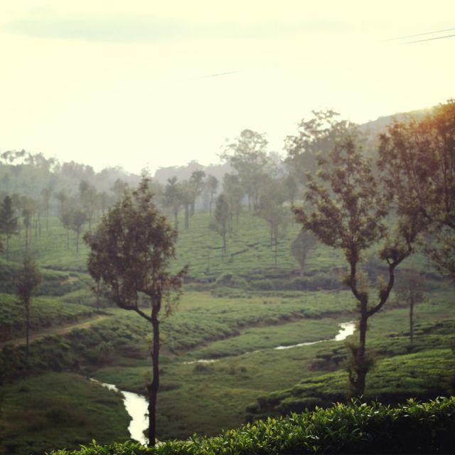 """Tea plantations, Valparai"" stock image"