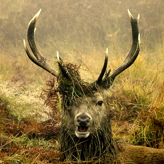 """Stag Night"" stock image"