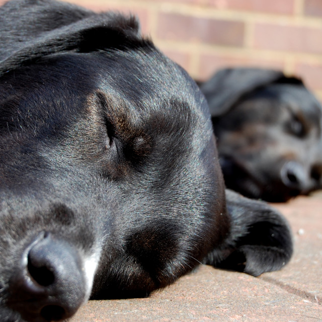 """Let sleeping dogs lie"" stock image"