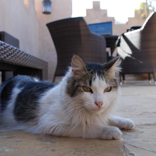 """""""Riad cat"""" stock image"""