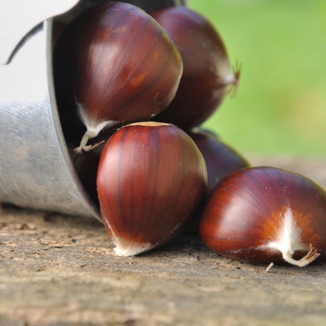 """""""chestnuts on board"""" stock image"""