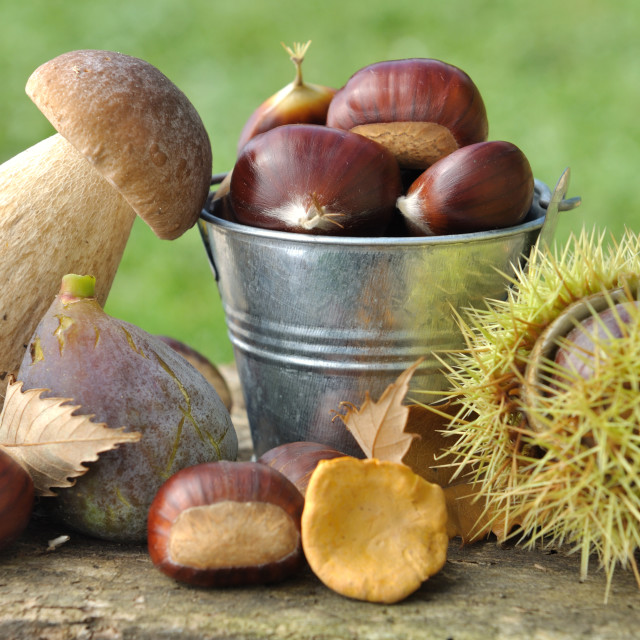"""autumnal harvest"" stock image"