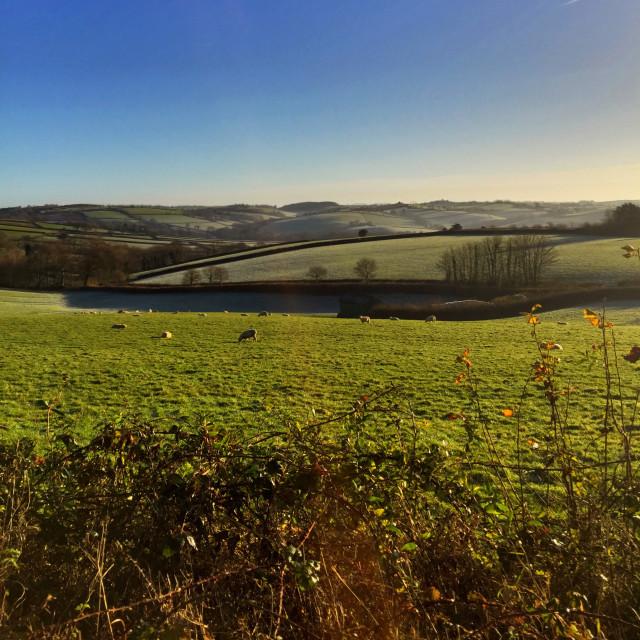 """Devon Landscape"" stock image"