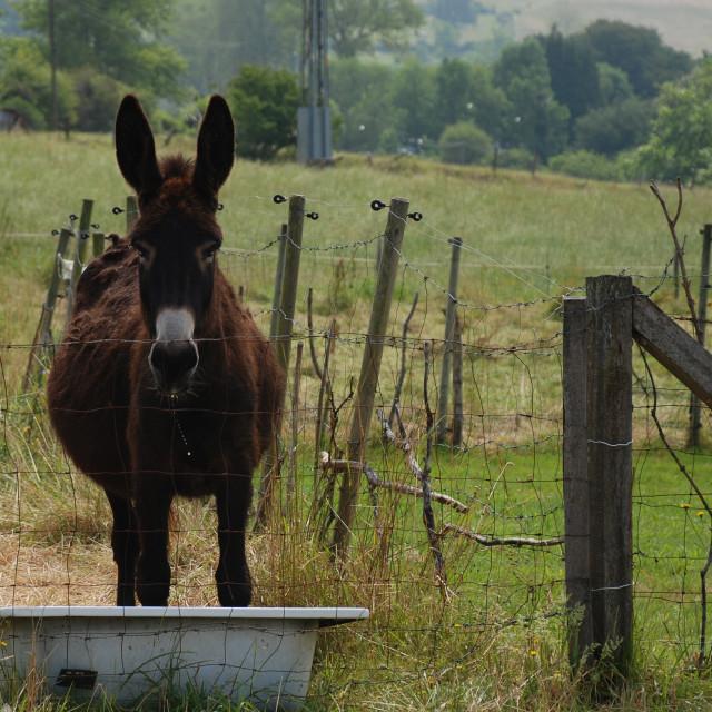 """""""Lonely donkey"""" stock image"""