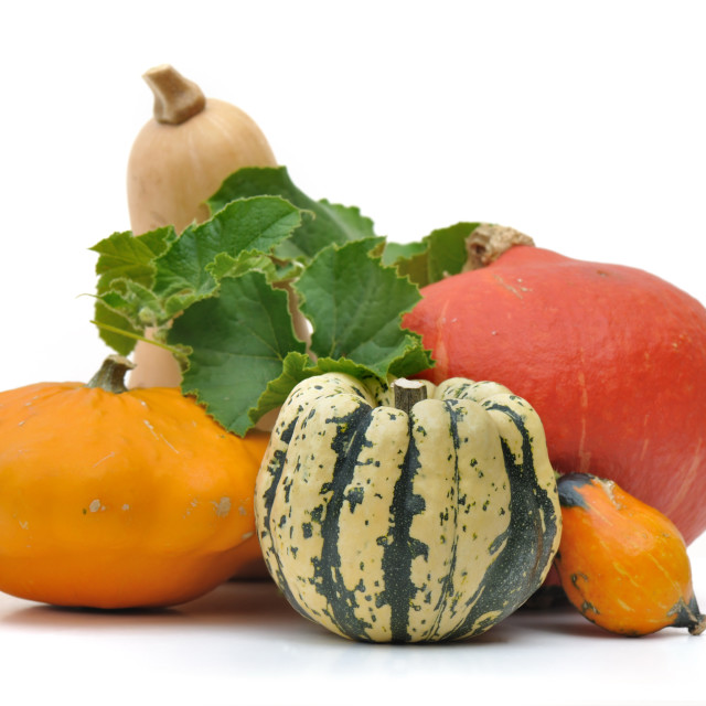 """""""various squashes"""" stock image"""