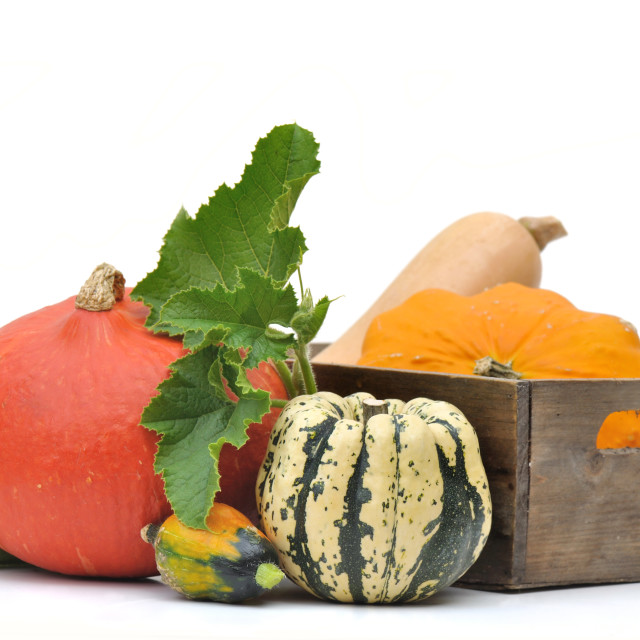 """various squashes"" stock image"