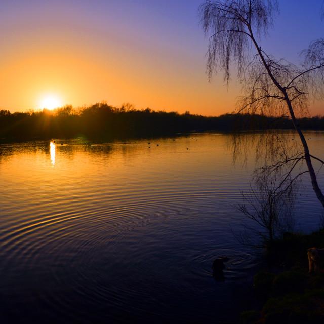 """Sunset Swim"" stock image"