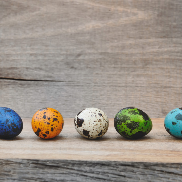"""quail eggs painted for Easter"" stock image"