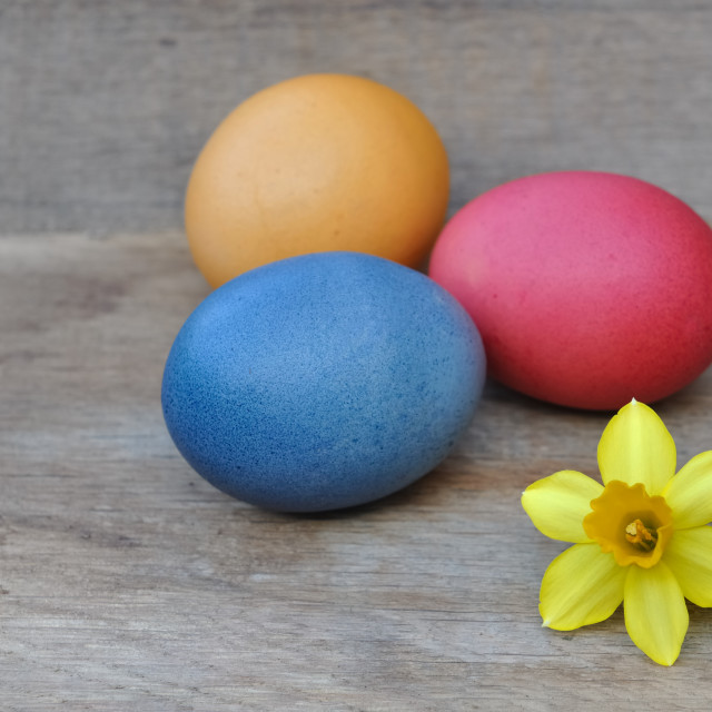 """Easter eggs and daffodil"" stock image"