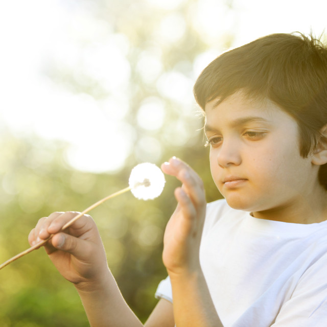 """""""Wishes-Young boy blowing on a dandelion flower in spring"""" stock image"""