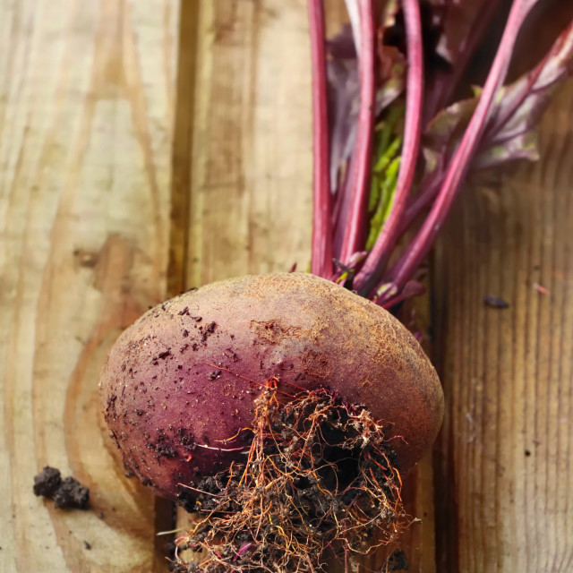 """beetroot"" stock image"
