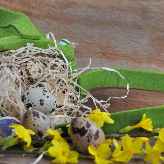"""""""quail eggs for Easter"""" stock image"""