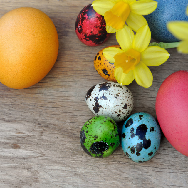 """""""easter eggs with daffodils"""" stock image"""