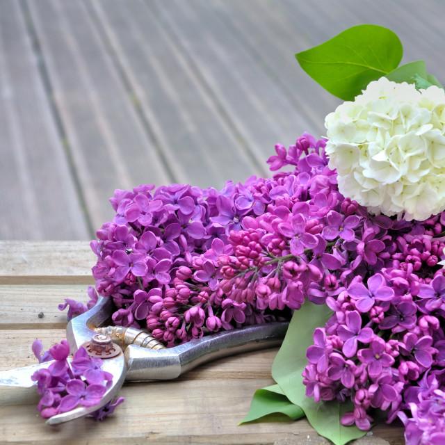 """""""flower on terrace"""" stock image"""