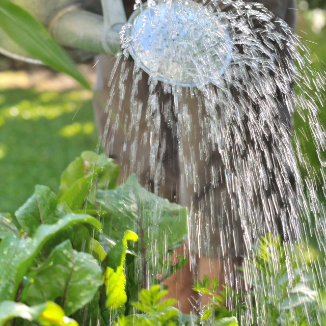 """watering garden"" stock image"