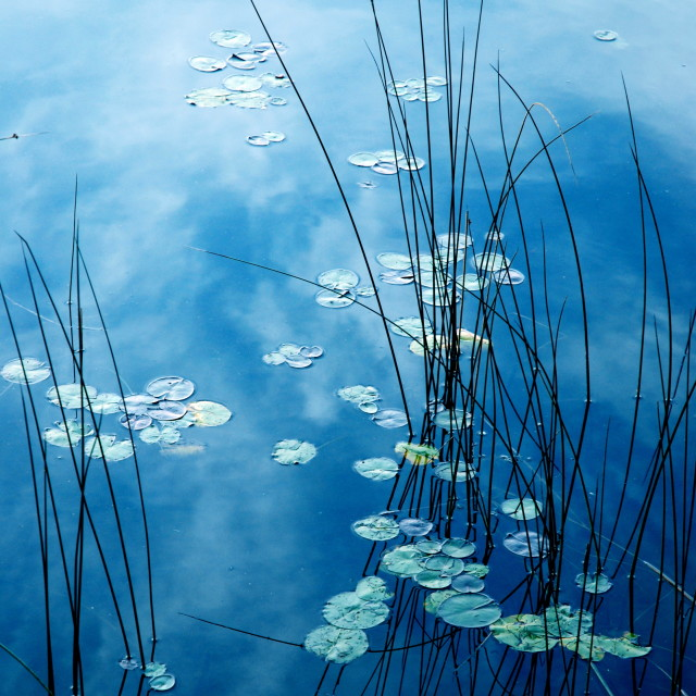 """Monet's Pond"" stock image"