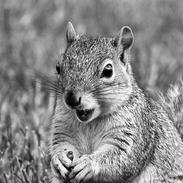 """""""Squirrely Snacktime"""" stock image"""