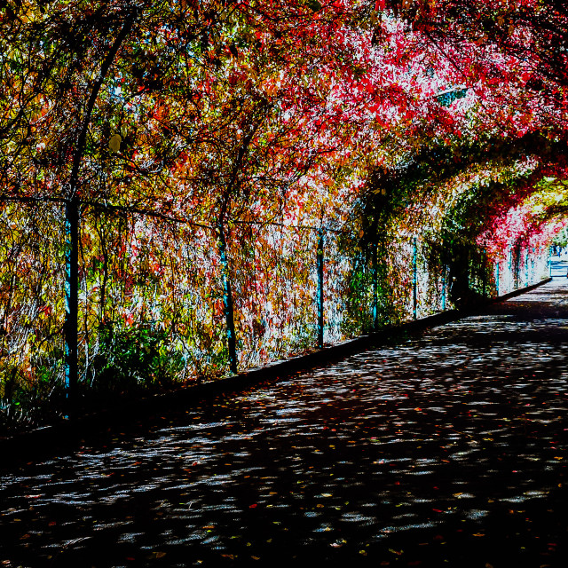 """""""Colors of Autumn"""" stock image"""