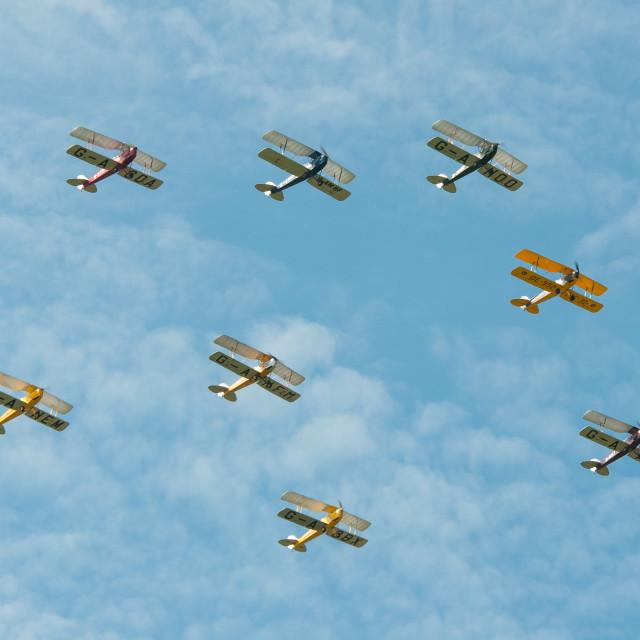 """Swarm of Tiger Moths"" stock image"