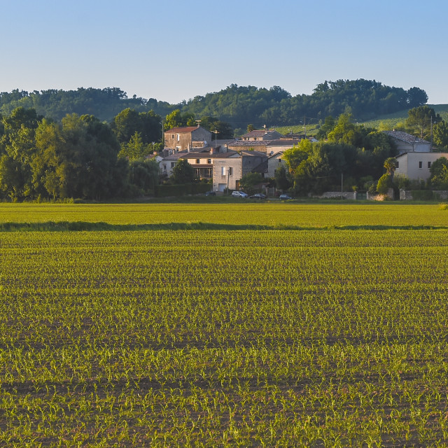 """Maîs-Corn Field-French Countryside"" stock image"