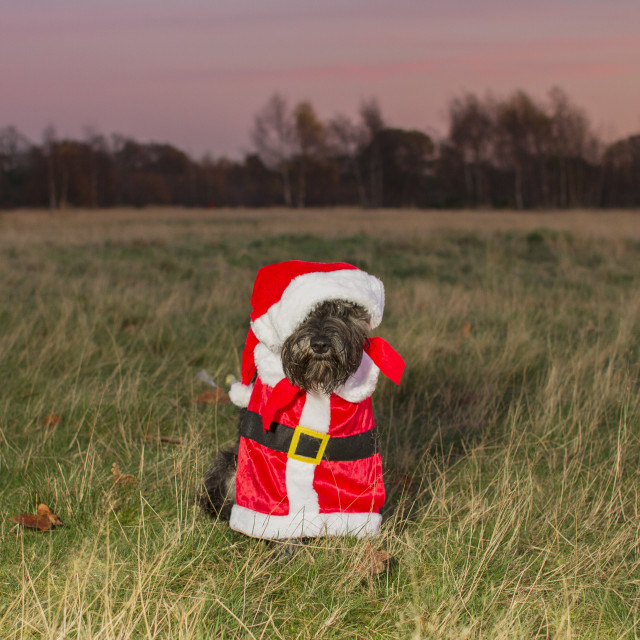 """Happy Woofmas"" stock image"