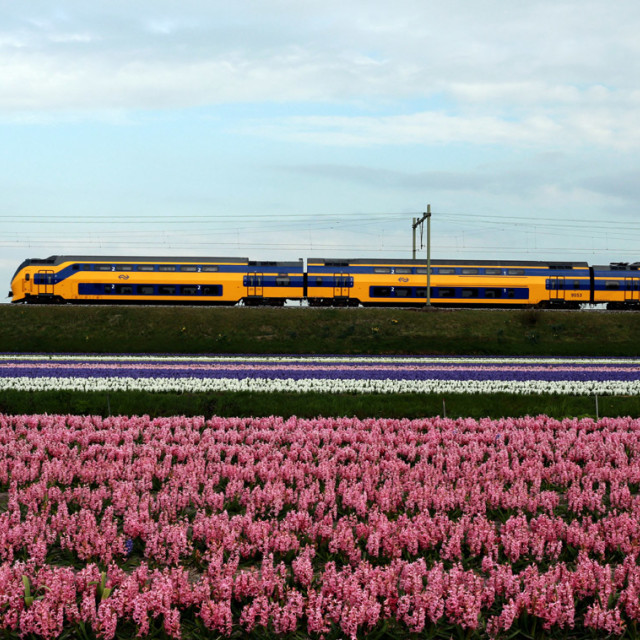 """Yellow Train, pink flowes"" stock image"