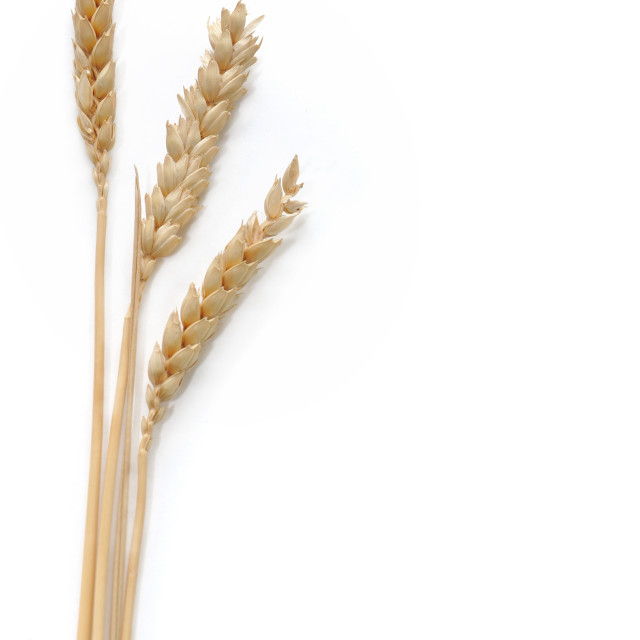 """three strands of wheat"" stock image"