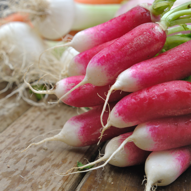 """fresh pink radish"" stock image"