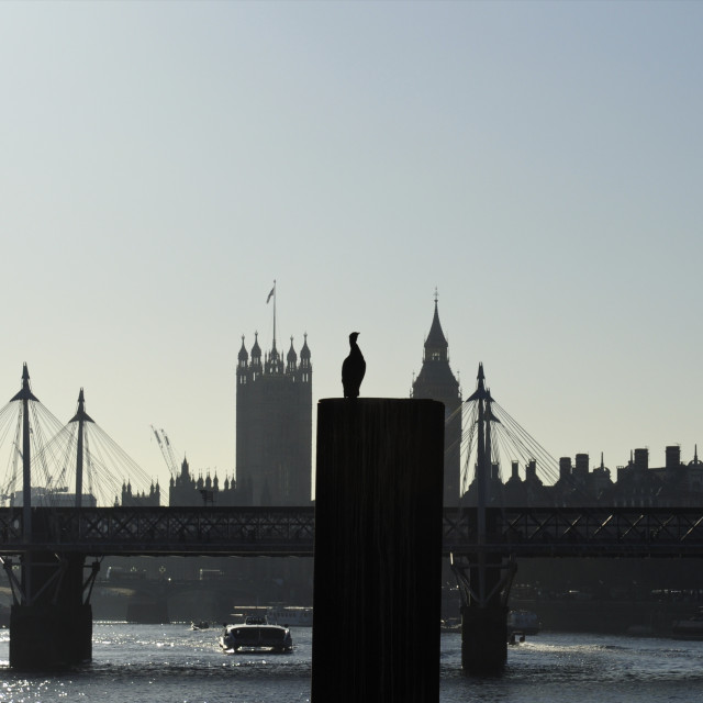 """London Skyline and Cormorant"" stock image"