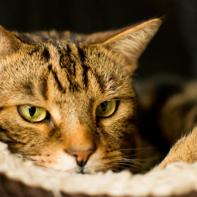 """""""Gorgeous Kitty"""" stock image"""