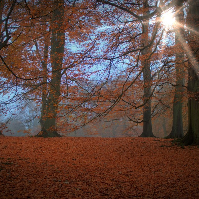 """Autumn Sunrays and Colours"" stock image"