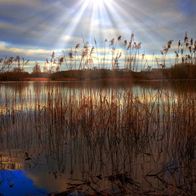 """""""Evening reflections over reeds"""" stock image"""
