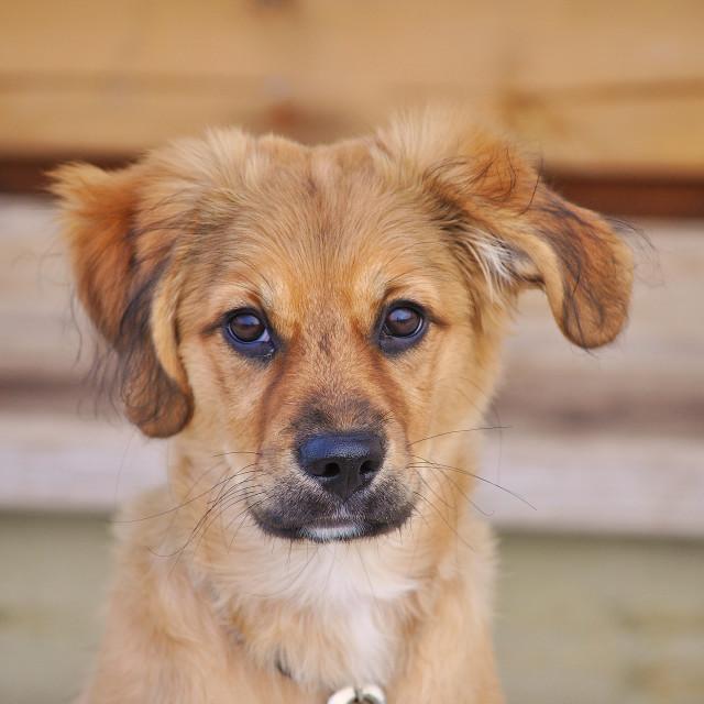 """""""The Cute Puppy Next Door"""" stock image"""