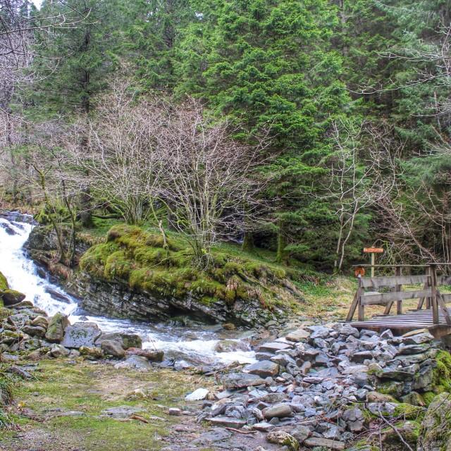 """""""Hiking the Norwegian woods"""" stock image"""