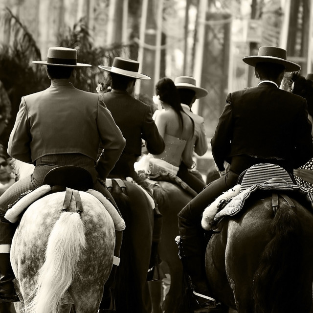 """Horse Parade"" stock image"