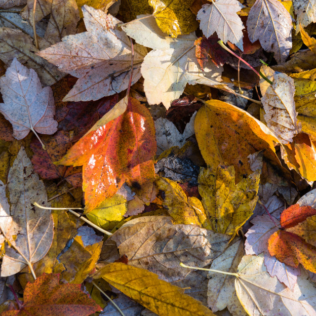 """Autumn color on the ground"" stock image"